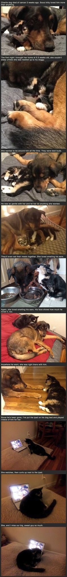 Heartbreaking Cat's Reaction To Losing Her Dog Best Friend cute animals dogs cat cats sad adorable dog story puppy animal pets kitten stories heart warming This made me cry. Animals And Pets, Baby Animals, Funny Animals, Cute Animals, Dog Died, Dog Best Friend, Mundo Animal, Crazy Cats, Animals Beautiful