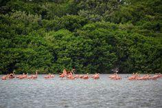 Flamencos Celestún México. #travel #traveling #viajar #viaje #flamingo #flamenco #jungle #river #gopro #selva #rio #water #agua #wild #wildlife #blog #entrepeneur #lifestylephotography #México #celestun #tourism #turismo