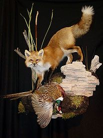 Love this fox mount