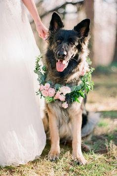 Wedding Pets: Gorgeous Photo Ideas For Your Album ❤ See more: http://www.weddingforward.com/wedding-pets/ #weddings