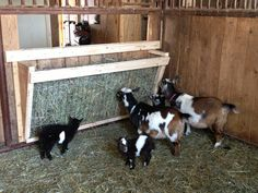 Goat Hay Feeder by Serendipity Wendy - just a picture, but the design seems pretty simple. Goat Hay Feeder, Diy Hay Feeder, Goat Playground, Goat Shed, Goat Shelter, Goat Barn, Nigerian Dwarf Goats, Raising Goats, Raising Farm Animals