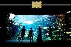 <3 this photo at the Florida Aquarium