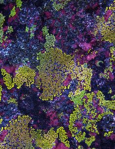 Items similar to Limited Edition 'Purple Lichen' Print All Nature, Amazing Nature, Natural Forms, Natural Texture, Patterns In Nature, Textures Patterns, Texture Art, Macro Photography, Belle Photo