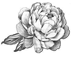 """Résultat de recherche d'images pour """"peony tattoo black and white"""""""