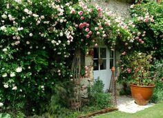 Bien placer un rosier : sur une façade ensoleillée