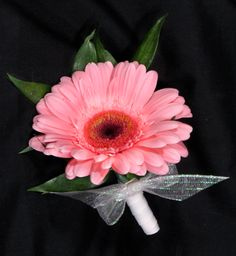 Light pink gerbera daisy corsage with white organdy simple bow. #gerbera #gerberacorsage #pinkcorsage