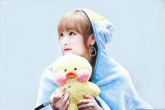 choi yena pics #coloriz (@yenapix) | Twitter Sakura Miyawaki, Baby Ducks, Japanese Names, Fandom, Yuehua Entertainment, Japanese Girl Group, Be A Nice Human, Extended Play, The Wiz