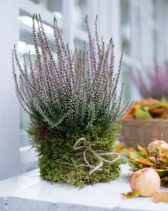 Deco Floral, Garden Spaces, Autumn Inspiration, Autumn Ideas, Front Yard Landscaping, Country Christmas, My New Room, Ikebana, Porch Decorating
