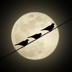 Three birds & the Moon