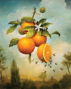 """Kevin Sloan » """"Abundance: Oranges"""""""