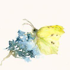 Butterfly and Flower ~ artist dearcatherina; watercolor   . . . .   ღTrish W ~ http://www.pinterest.com/trishw/  . . . .   #art_journal