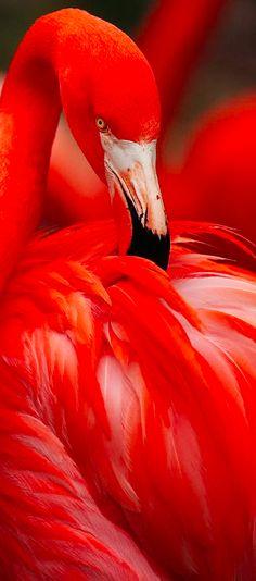 Flame • photo: Cyn Valentine