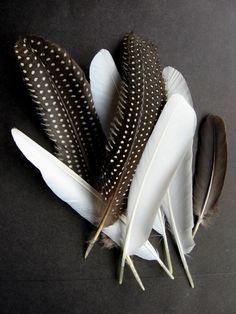 Various Feathers by Arina Feather Art, Bird Feathers, White Feathers, Feather Touch, Paper Feathers, Feather Painting, Foto Poster, Interior Design Magazine, Wabi Sabi
