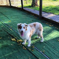Rilten Kennels provide full Friendly enclosed indoor and outdoor space with good food for and for more visit us today. Pet Boarding, Best Dog Food, Cattery, Going Away, Dog Food Recipes, Your Pet, Dog Cat, Corgi, Indoor