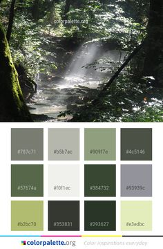 Waterfall Water Nature Color Palette #colors #inspiration #graphics #design #inspiration #beautiful #colorpalette #palettes #idea #color #colorful #colorscheme #colorinspiration #colorcombinations #colorcombos #colorpalette_org Nature Color Palette, Green Colour Palette, Green Colors, Colours, Color Palettes, Wallpaper Stencil, Painting Wallpaper, Paint Colors For Home, House Colors