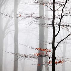 Commended - Your view: Misty Beeches, Micheldever, Hampshire, England, by Paul Sansome, Kent