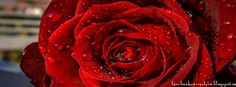 Facebook Covers Love: Beautiful Water Drops Red Rose Flower Facebook Cover