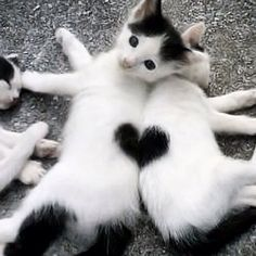 Happy Friday Cuties! #valentinesday #kittens # #found
