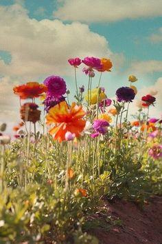 Prachtige lente foto