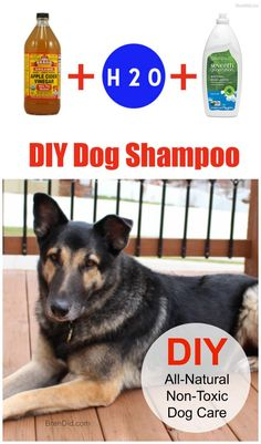 DIY dog shampoo, all-natural pet care, non-toxic shampoo; great for itchy dogs with sensitive skin. via @brendidblog