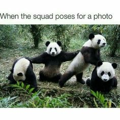 Memes for funny pandas with captions hilarious pinterest panda squad voltagebd Image collections