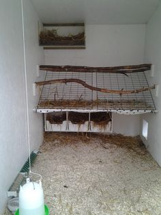 Interior chicken coop