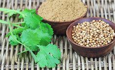 (Zentrum der Gesundheit) – Koriander ist vielen aus der asiatischen Küche bekannt. Das grüne Kraut und seine Samen verleihen aber nicht nur Speisen einen unverkennbaren Geschmack. Im menschlichen Organismus leisten die zahlreichen sekundären Pflanzenstoffe unermüdliche Aufräumarbeiten. Ob Magen-Darm-Beschwerden, antibiotikaresistente Infektionen oder chronische Entzündungskrankheiten, die heilsamen Koriander-Wirkstoffe nehmen es mit den hartnäckigsten Krankheitserregern auf und fördern die…