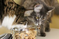 Tuna flavoured cat treats are easy to make with just a few simple ingredients. The purrfect Valentines Day gift for your cat. | Baking From the Heart – Homemade Cat Treats