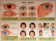 Nos yeux (affiche scolaire) Science, Idioms, Natural History, Vocabulary, Clever, Plates, French, Inspiration, Learn French