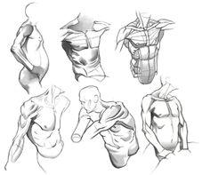 Human Muscle Anatomy, Body Anatomy, Anatomy Art, Anatomy Study, Male Figure Drawing, Figure Drawing Reference, Anatomy Reference, Human Anatomy Drawing, Body Drawing
