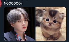 yoongi cat He is secretly a cat istg , what other secrets could he be hiding Min Yoongi Bts, Min Suga, Daegu, Yoonmin, K Pop, Bts Memes, Namjin, Taekook, Bts Facts