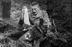 Merci brave toutou:  A Red Cross dog brings bandages to a wounded soldier