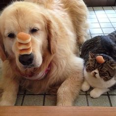The pair that pancakes together, cuddles together. It's just fact, people. | 21 Cuddly Cat And Dog Best Friends To Make You Squee