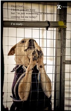 Please adopt, foster, volunteer, donate or transport. PLEASE SAVE A LIFE!!