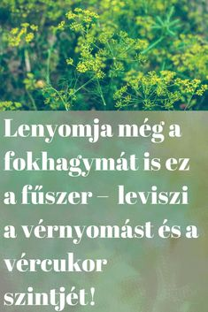 Lenyomja még a fokhagymát is ez a fűszer – gyorsan leviszi a vérnyomást és a vércukor szintjét! - Szupertanácsok Doterra, The Cure, Good Food, Medical, Herbs, Humor, Healthy, Fitness, Life