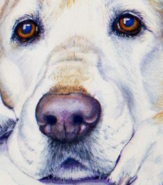 remington  watercolor, this is AMAZING! I can see this dogs soul through his eyes....stunning work!