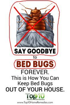 bed bugs how to get rid of them home remedies