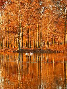 Rockland Lake State Park, New York.  Photo: Stanley Zimny