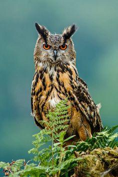 "красиво-дикая природа: ""Красота с крылышками на Naturfotografie - Стефан Бетц """