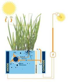 オランダでは、植物から電力を生み出している!?まったく新しい自然エネルギーに注目 / http://tabi-labo.com/ //////// 植物の力で街灯に光を。 すでにオランダでは実用化済!////////