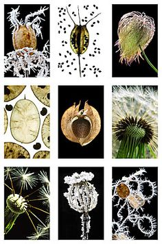 Seedheads from Andy Small