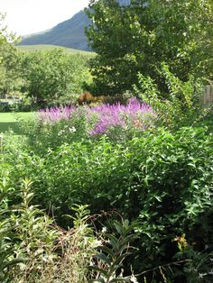 Garden Flowers - Annuals Or Perennials Fynbos Gardens Hermanus Landscape Maintenance, Irrigation, Perennials, Gardens, Planting, Flowers, Plants, Outdoor Gardens, Royal Icing Flowers