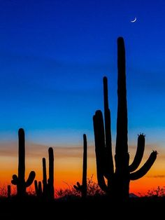 Sunset in Tucson Arizona. Captured in Saguaro National Park on Tucson Sunset, Desert Sunset, Tucson Arizona, Texas Sunset, Beautiful Sunset, Beautiful World, Landscape Photography, Nature Photography, Photography Tips