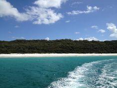 Wunderschöne Farben und traumhafte Strände, während dem Bootsausflug auf der Suche nach Delfinen. Airlie Beach, Great Barrier Reef, Brisbane, Surfer, Travel Pictures, Water, Outdoor, Humpback Whale, White Sand Beach