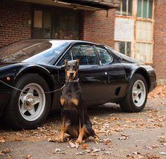 • Dobberman Mood. Ferrari 512 BBi •  By @darinschnabel #dobberman #italy #love #france #top #ferrari #mercedesbenz #lamborghini #bugatti #porsche #carporn #vintage #firstpost #first #elegance #lux #luxury #luxurycar #luxurylife #f4f #fashion #cars #londoncars #blacklist #newyork #autoporn #automotive #instacar #follow #carvintage