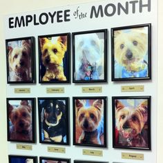 -Repinned- What a fun idea! Dog Employee of the Month Board.