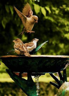 Summer style!!! Be kind and Remember to offer birds water throughout the summer! DIY a bird bath!