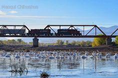Puente del tren sobre el rio San Pedro