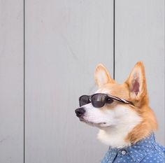 These Dapper Dogs Are the Next Must-Follow Instagram Celebs via Brit + Co.