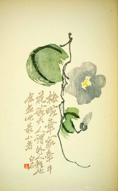 1953 Lithograph Convolvulus Arvensis Bindweed Flower Leaf Morning Glory Flower - Period Paper